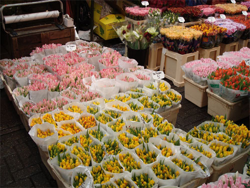 The Flower Market in Amsterdam (note the prices….50 tulips for 5 or 7,5 Euro….)