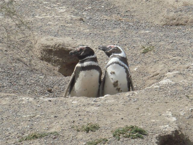 penguins-and-wine-032