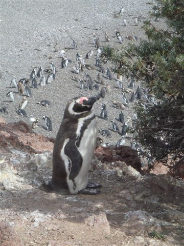penguins-and-wine-043