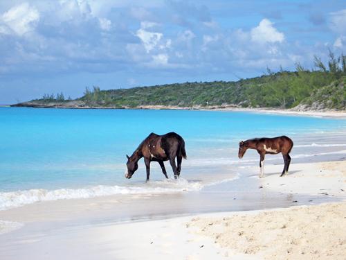 HMC_Horseback_Riding_02