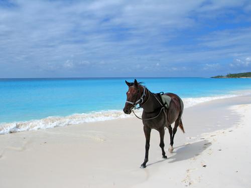 HMC_Horseback_Riding_06