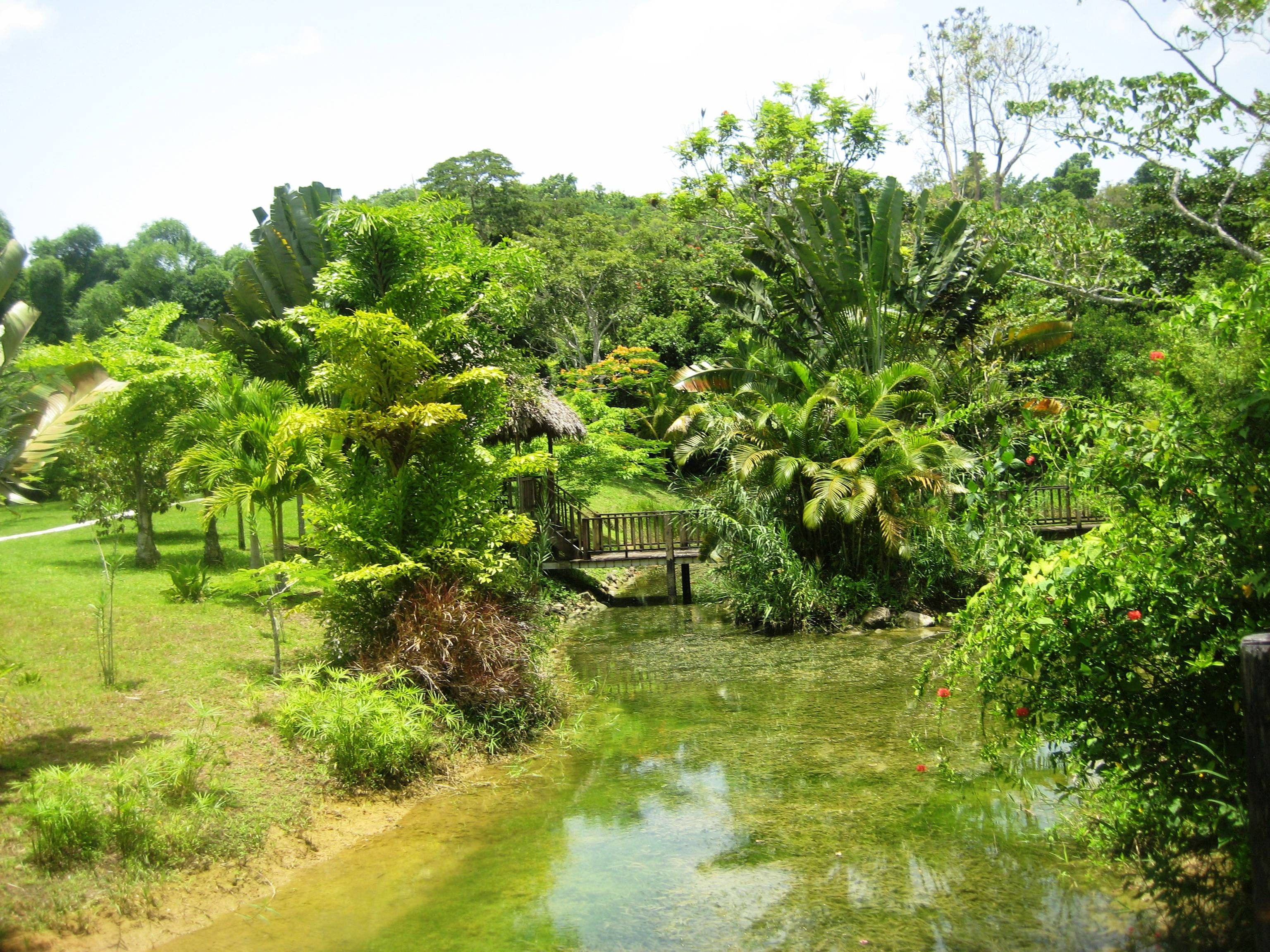 The Lush Green Walkway at Beautiful Chukka Cove, in Ocho Rios Jamaica
